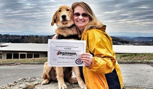dog board and train certificate