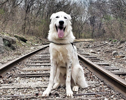 Dog Training Results